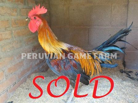 For Sale - Peruvian Game Farm